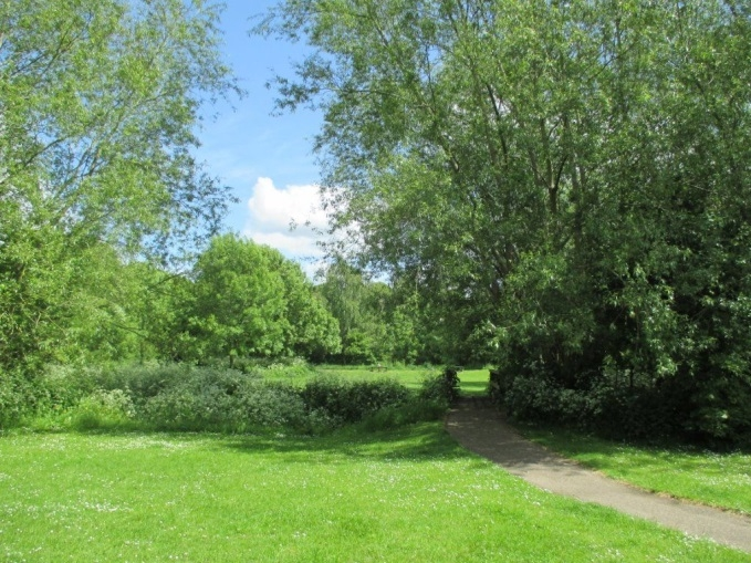 Open space at Millennium Green