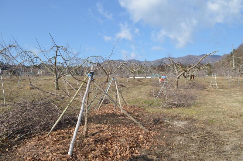 伐採後は新たな木を移植します。