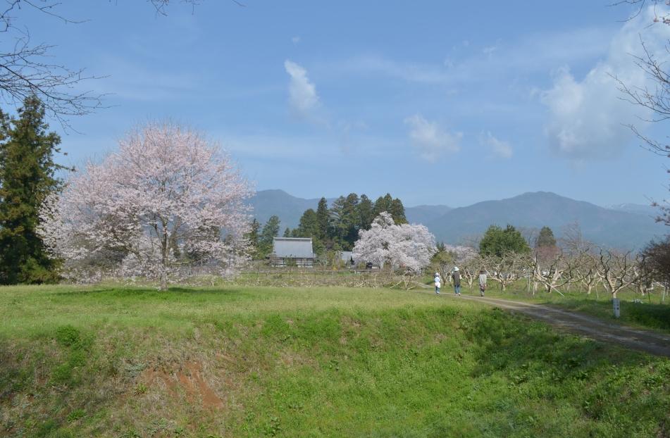 松岡城址から松源寺を望む