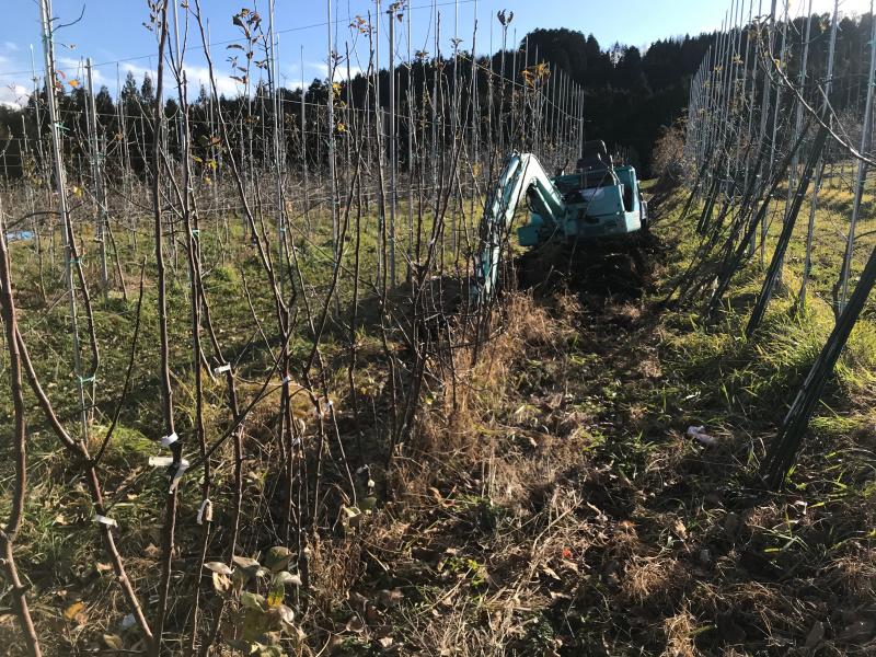 自家生産苗木の掘り上げ
