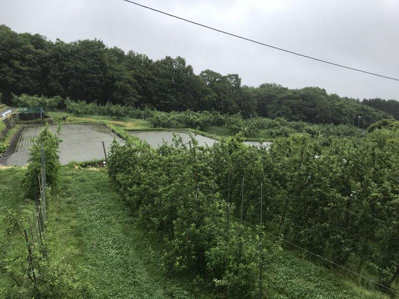 6月11日いよいよ梅雨入りの果樹園