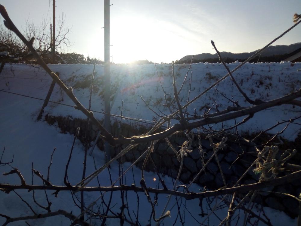 夕方太陽が沈むと一気に寒くなります