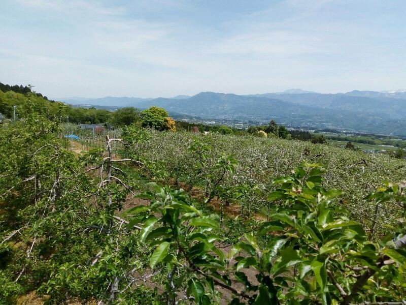 りんご畑と伊那谷の新緑