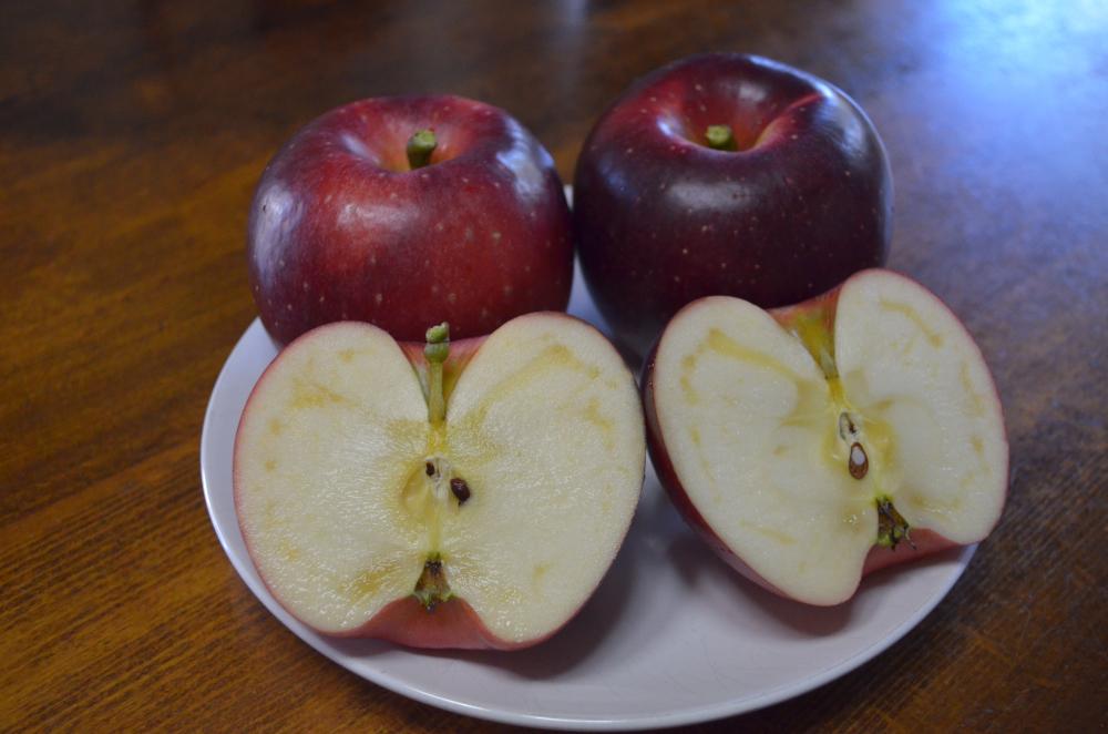 シナノホッペ果実は真っ赤です
