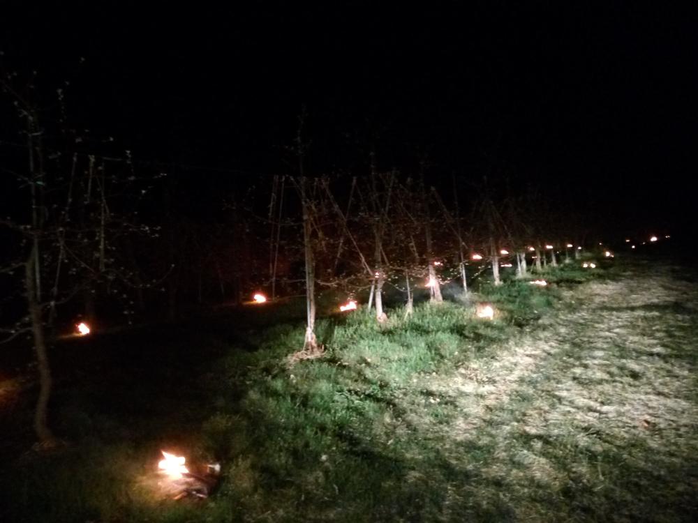 朝2時、シナノスイートの畑で燃焼資材を焚き霜対策中
