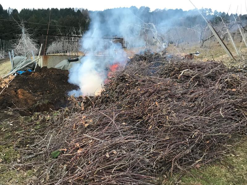 りんごの剪枝を集め炭焼き中です。