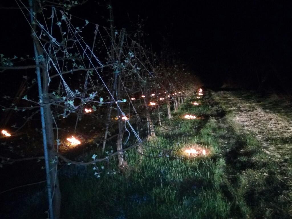 シナノスイートの樹の下で火を焚きました
