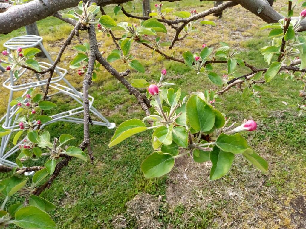 摘花終了後の王林