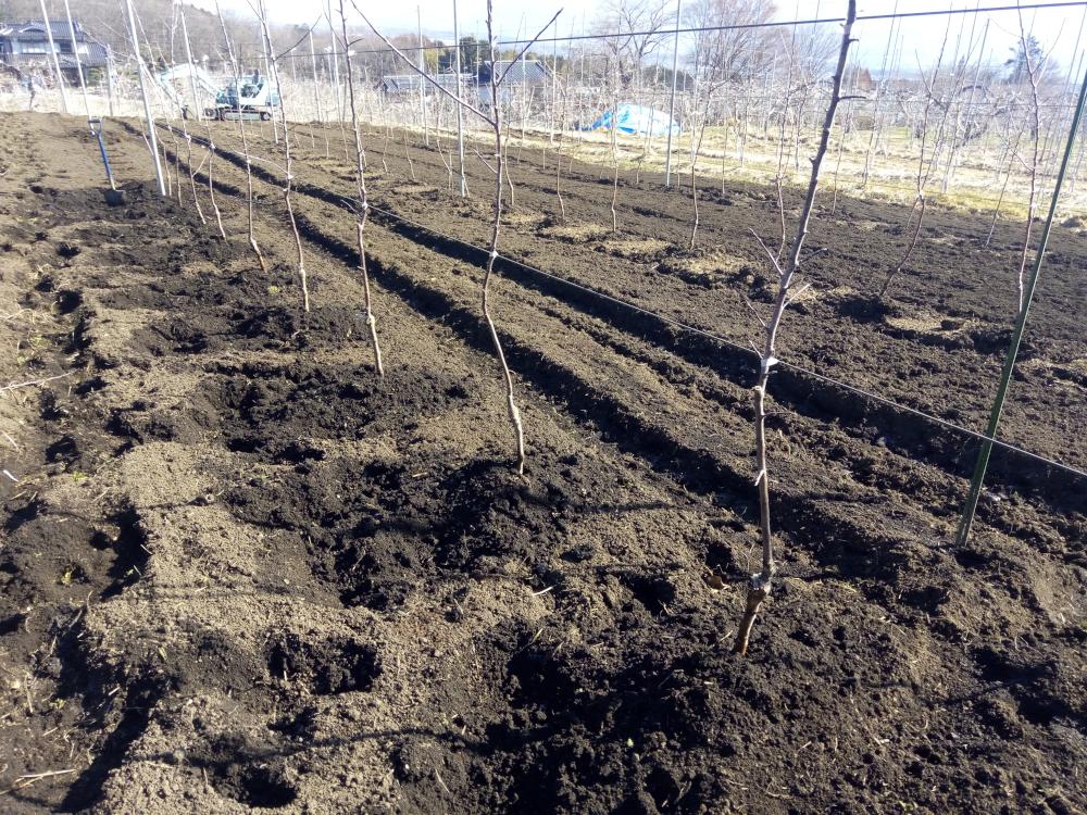 土を寄せ根を埋めます