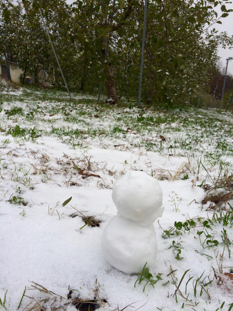 まるす小平果樹園では初雪です。