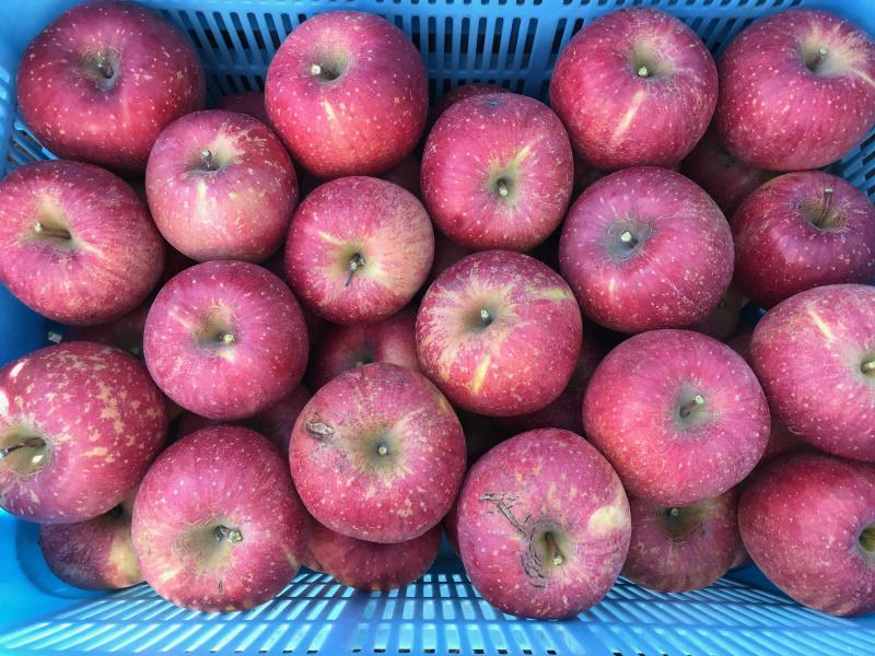 傷や果実表面のざらつきが多い収穫果実