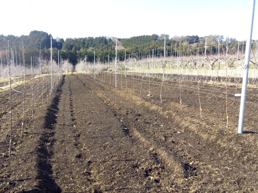 植付け場所が周囲より一段高くなるよう畝上げして完成