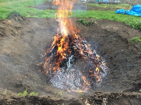 炭焼き完了。