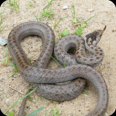 Schlangen hören gut - aber wie?