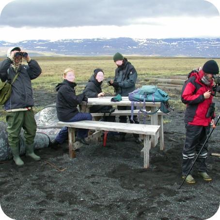 Islandexkursion: Organisierte ornithologische Expedition(Island 2006).
