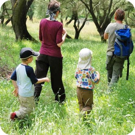 Naturführung: Im Olivenhain gibt's viel zu sehen (Griechenland 2007).