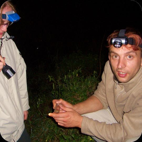 Froschtümpel: Nächtliche Regenwaldführung (Kenia 2004).