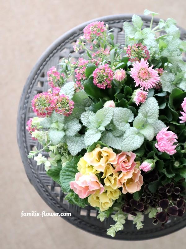 可愛らしいピンクの寄せ植え