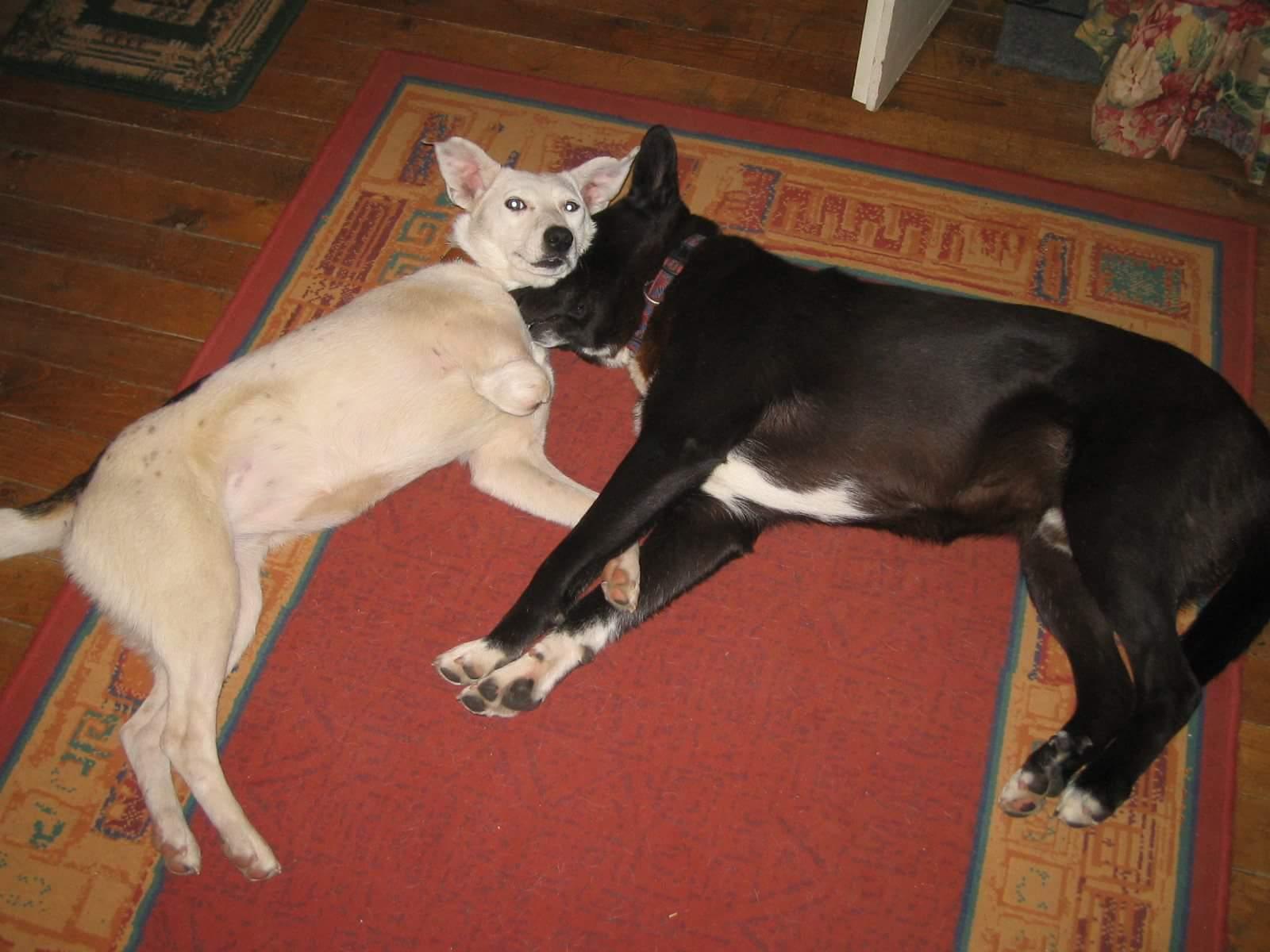 Lizzie mit Foxy