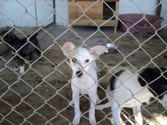Oktober 2014 wurden die Zwei aus dem Tierheim Stara Zagora geholt, sie waren zu dem Zeitpunkt   4 Monate alt/ Vorher