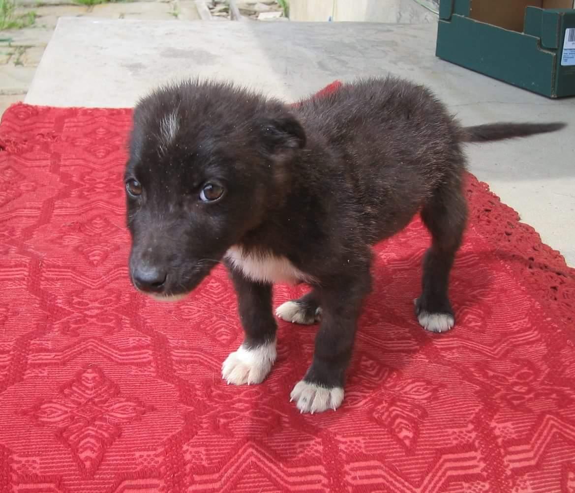 Foxy gefunden auf der Straße 2009/ Vorher