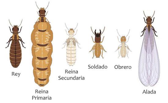 Galer a de insectos expertos en control de plagas - Soluciones para mosquitas de la humedad ...