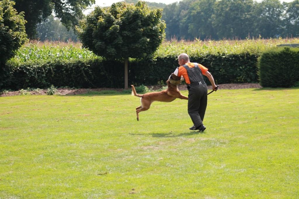 Hundetreffen 110 Teampartner-Hund-Hoya e.V.