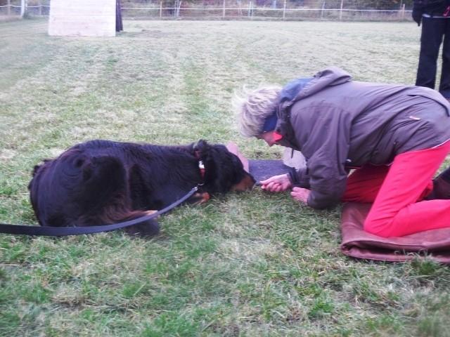 ZOS Seminar mit Hund 7