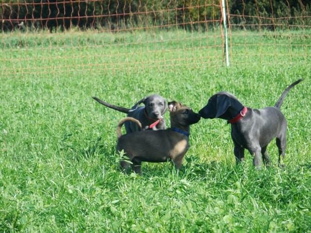 Welpenschule Teampartner-Hund-Hoya 1