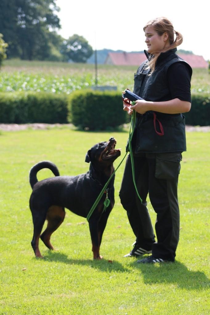 Hundetreffen 28 Teampartner-Hund-Hoya e.V.
