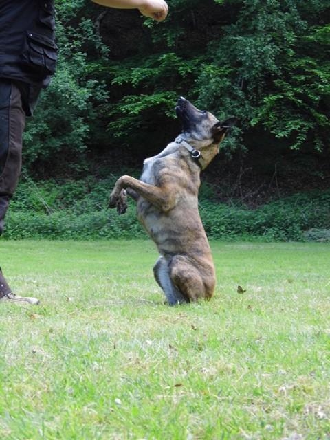 Trick Zita Teampartner-Hund-Hoya e.V.
