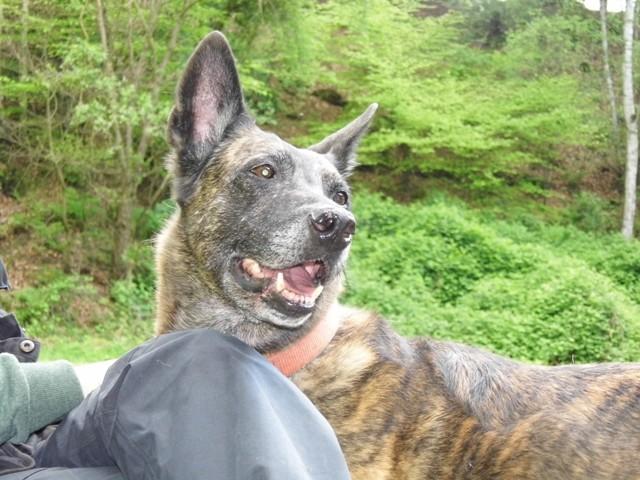 Dakota Teampartner-Hund-Hoya e.V.