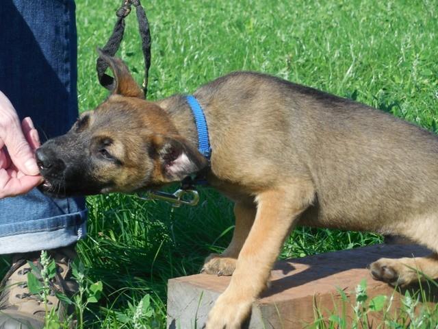 Welpenschule Teampartner-Hund-Hoya 15