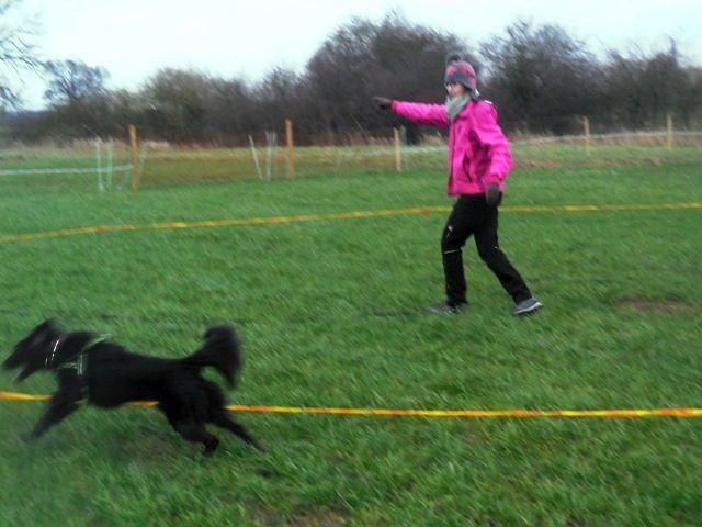 Zirkeln mit Hund 16