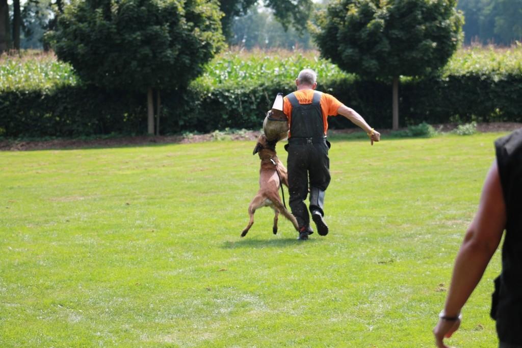 Hundetreffen 106 Teampartner-Hund-Hoya e.V.