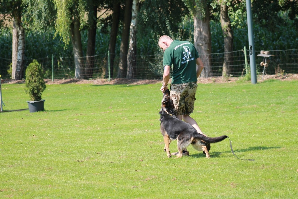 Hundetreffen 14 Teampartner-Hund-Hoya e.V.