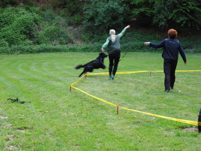 Zirkeln 2 Teampartner-Hund-Hoya e.V.