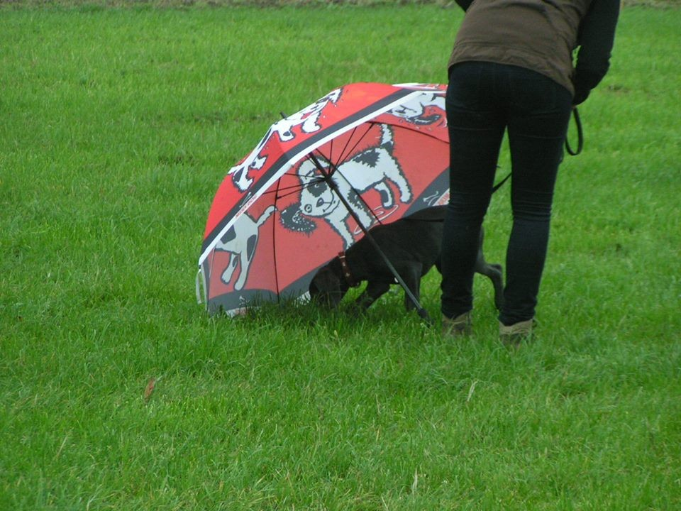 Welpenschule Teampartner-Hund-Hoya 62
