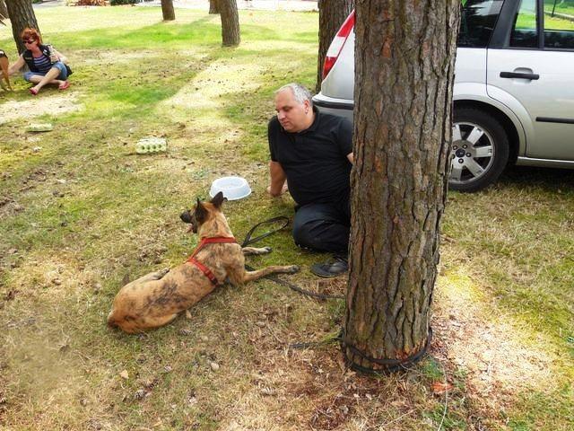 Teampartner-Hund-Hoya e.V bei FBSt Nienburg 41