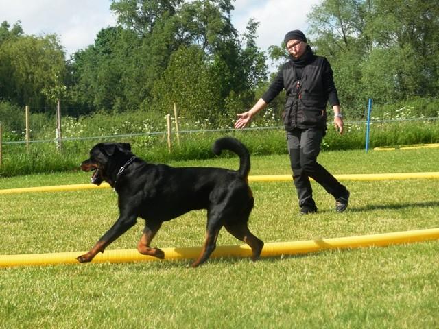 Zirkeln mit Hund 3