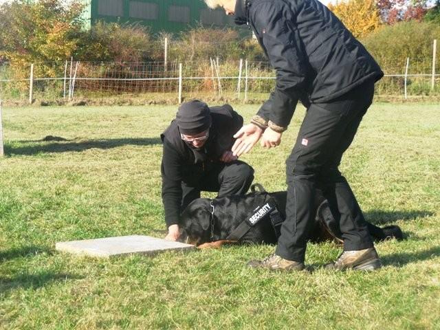 ZOS Seminar mit Hund 26