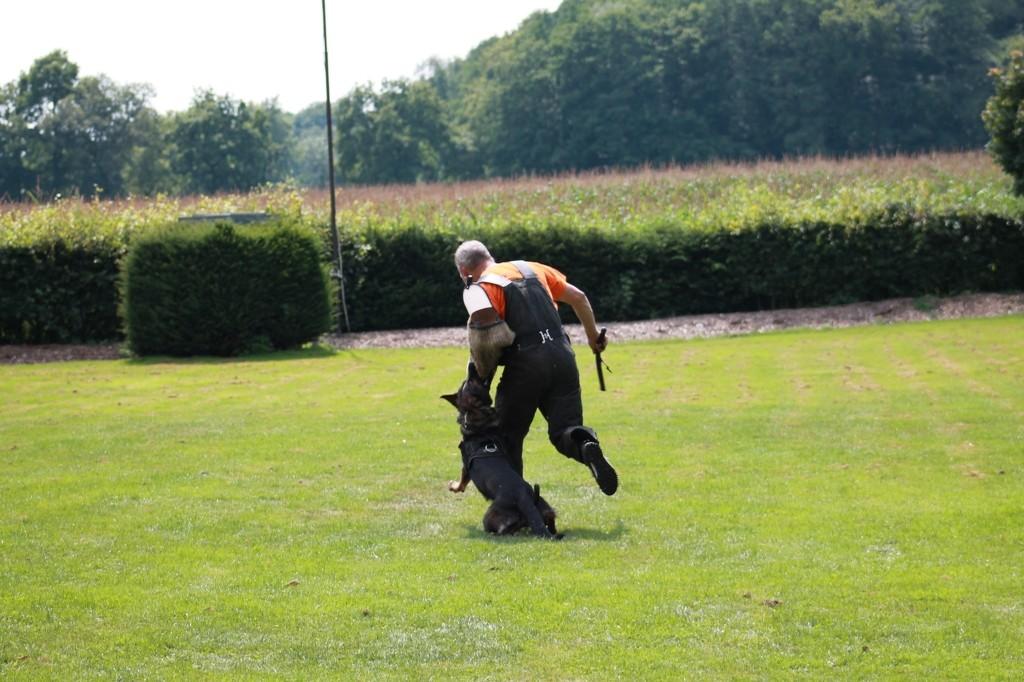 Hundetreffen 100 Teampartner-Hund-Hoya e.V.