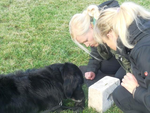 ZOS Seminar mit Hund 19