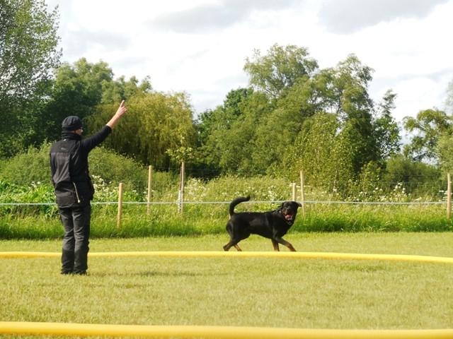 Zirkeln mit Hund 6