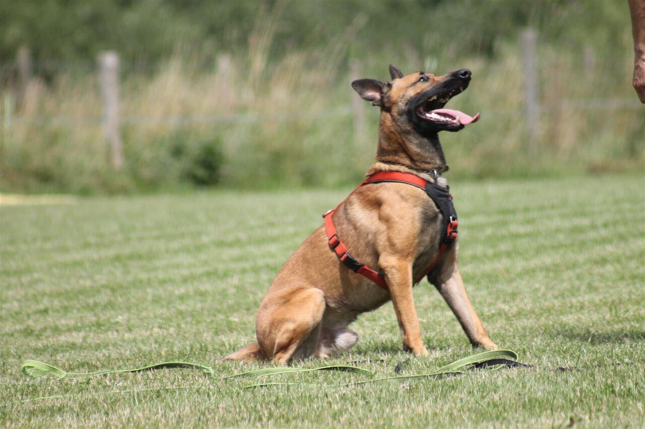 Home Hundeschule Teampartner Hund Hoya Ev