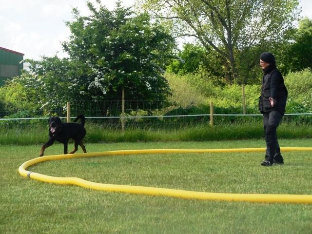 Zirkeln mit Hund 5