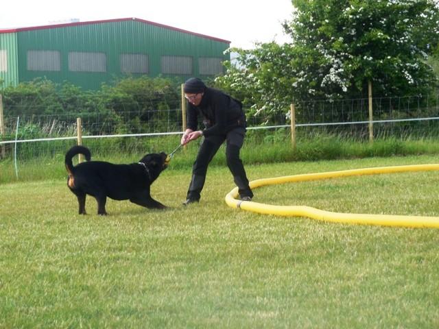 Zirkeln mit Hund 2