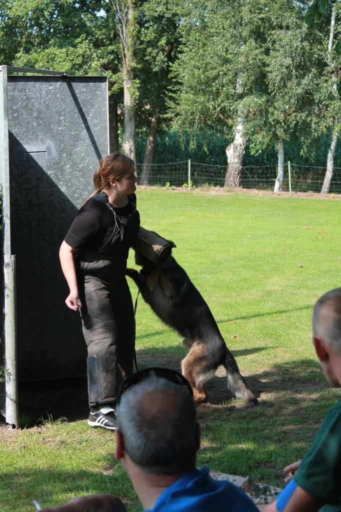 Hundetreffen 8 Teampartner-Hund-Hoya e.V.