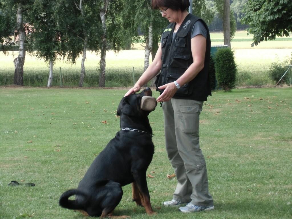 Training Conny mit Carlos Teampartner-Hund-Hoya e.V.