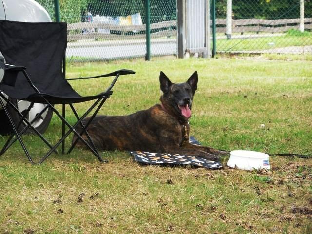Teampartner-Hund-Hoya e.V bei FBSt Nienburg 7